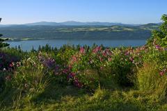 columbia river gorge, oregon, usa. oregon landscape with columbia river. summ - stock photo