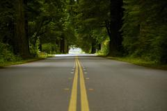 Forest road in redwood forest, crescent city, california, usa. ground level Stock Photos