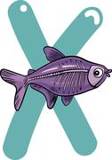Stock Illustration of X for x-ray fish