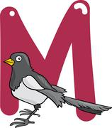 M for magpie - stock illustration