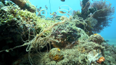 Nylon fishing line tangled around coral reef Stock Footage
