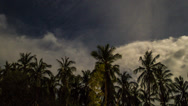 Stock Video Footage of coconut palms. night. timelapse