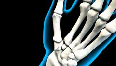 X-Ray of Human Hand bones 4K. ultra HD Stock Footage