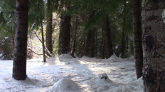 Light, Thaw, and Deep Forest Stock Footage