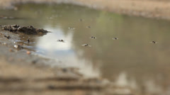 Flying Ants in water - stock footage
