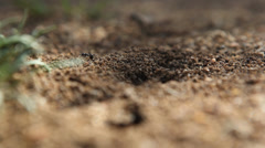 Ants in Anthill Stock Footage