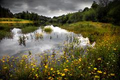 flowery lake - stock photo