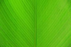 Leaf as background Stock Photos