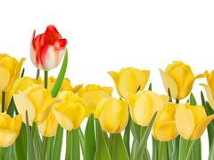 Yellow tulips and one red. EPS 8 - stock illustration