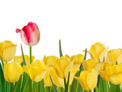 Yellow tulips and one red. EPS 8 Stock Illustration