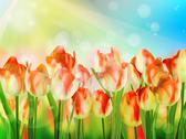 Stock Illustration of Beautiful Red Tulips. EPS 10