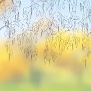 Stock Illustration of Bent birch branches on a cloudy autumn day.  EPS 8