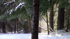 Light, Thaw, and Forest Stock Footage