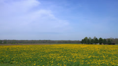 Driving by flowering pasture hay field in early spring. Stock Footage