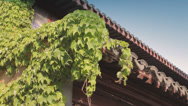 Stock Video Footage of Low angle close up of wooden roof of ancient Buddhist temple in Shanghai, China