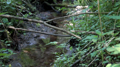 Spring creek view Stock Footage