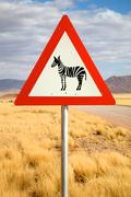 Danger Zebras Road Sign - stock photo