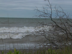 large rolling waves crashing onto a beach with tree branches - slo motion -01 - stock footage
