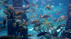Underwater colorful fish in giant aquarium 1 Stock Footage