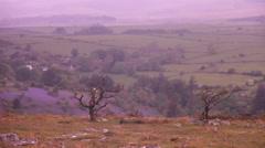 Dartmoor landscape, lavender field Stock Footage