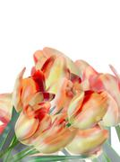 Different color tulips isolated on white. EPS 10 Stock Illustration