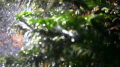 Splashes water on bokeh spellbinding background fir-tree. Shift in focus from Stock Footage