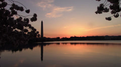 Cherry Blossoms - Washington Monument Stock Footage