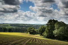 Landscape image of agricultural farm with new planted crops in summer Stock Photos