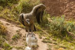 Andean condor spreading wings Stock Photos