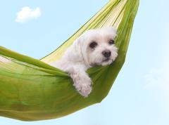 Lazy dazy dog days of summer Stock Photos