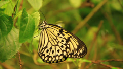 Monarca Butterfly On A Leaf Stock Footage