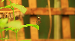 Red Butterfly on a leaf Stock Footage