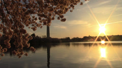 Cherry Blossoms in Washington, DC at Sunrise Stock Footage