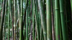 Hawaii bamboo grove Haleakala 1 Stock Footage