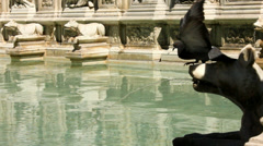Pigeons Balances While Drinking from Fonte Gaia Siena - 29,97FPS NTSC Stock Footage