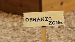 Organic veggies - stock photo