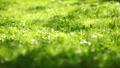 green grass in the park, Lviv, Ukraine, dolly 6 Footage