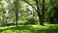summer green park, Lviv, Ukraine, dolly 3 Footage