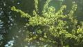 summer green park, Lviv, Ukraine, dolly 2 Footage