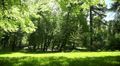 summer green park, Lviv, Ukraine, dolly 1 Footage
