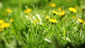 green grass in the park, Lviv, Ukraine , dolly 1 Footage