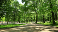people in the green park, Lviv, Ukraine, dolly 3 Footage