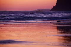 Pacific ocean sunset - american northwest cost, washington state, usa. reddis Stock Photos