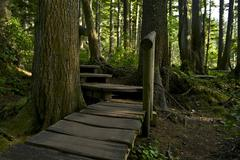wooden pathway trail in olympic national park, washington state, usa. rainfor - stock photo