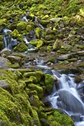 mossy mountain stream in the olympic national park, washington, usa. vertical - stock photo