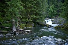 rainforest hoh river - washington state rainforest landscape. olympic nationa - stock photo
