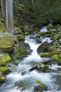 rocky creek - cascades mountains, washington state, usa. mountain creek. natu - stock photo