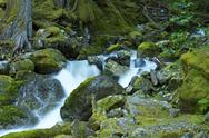 Stock Photo of mossy mountain river - rocky mossy creek landscape. washington state north ca