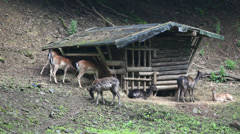 Wooden hut for animals Stock Footage