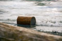 log in the water - small log in the lake water - stock photo